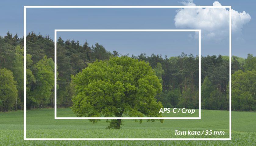 full-frame-aps-c format