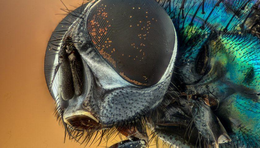 Ultra makro çekim: Sinek gözü