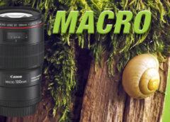 Makro Fotografie-1