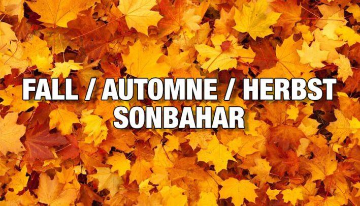 herbst | fall | automne | sonbahar